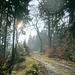 Kilometerweit keine Menschenseele - in den Hochlagen des Osterwalds.