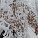 Laub- und Schneelast