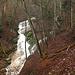 die Combe liegt seit 2009 in einem Waldreservat:[http://www.bourgeoisie-neuveville.ch/RF%20Pilouvi/Pilouvi.html]