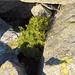 Farn zwischen Gneisblöcken oberhalb Pezze Grosse