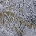 Noccioli sotto la neve 1