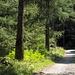 Ausklang im kühlen Wald entlang des Fiume Peccia