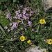 Im Abstieg vom Mount Mellenthin - Nachdem uns lange nur Geröll begleitet hat, gibt's nun auch wieder Blumen.