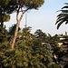 Fast so grün wie im Sommer! Da es nur wenig laubabwerfende Pflanzen in den Giardini Vaticani hat, lohnt sich ein Besuch zu jeder Jahreszeit.