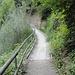 Der Weg führt durch üppiges Grün