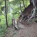 Der Weg durch den wunderschönen Wald
