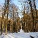 Waldweg in der Dickere.
