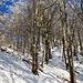 Schöner Zickzack-Trail, steil...