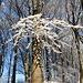 Schnee-Eis-Ast-Skulptur.