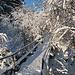 ..... das romantisch verschneite Brücklein Richtung Kappeler Alpe.