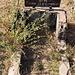 Ein muslimisches Grab.