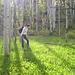 field of aspen + me
