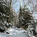E' nevicato 2-3 giorni prima, ma la neve rimane sulle piante nonostante il sole a causa delle temperature rigide
