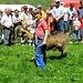 Dieses Foto und die zwei Nächsten stammen von der Ziegenprämierung