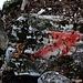 Der Aufstieg von der Waldlichtung zum Passo Crocetta / Passo del Crosèt (1360m) ist kein offizieller Bergweg und Wegspuren sind nicht durchgängig gut sichtbar. Doch oft rote weisen Pfeile und Punkte dem Berggänger die Richtung.
