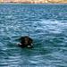 [u Zina] schwimmt in dem nördlichen See