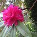rote Blüten säumen meinen Weg