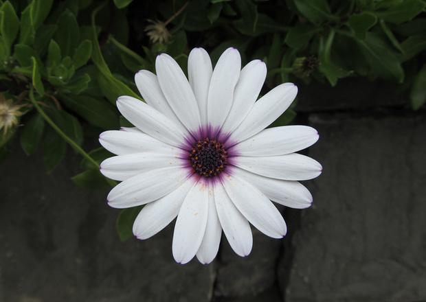 noch eine schöne Blüte