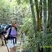 Bambus-Bult