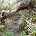 schöne Dschungelstimmung - tolle Wegführung