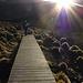 Der Weg führt über sogeannte Boardwalks