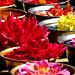 Immer frische Blumen auf den Altaren