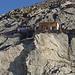 Die spektakulär gelegene Oberaarjochhütte 3256m