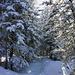 Der Weg zum Leiterhorn noch sehr winterlich...