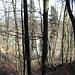 Bald schimmert der Egelsee durch die Bäume - scheint noch vereist.