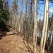 Der Weg auf der westlichen Seeseite wird bewusst nicht erhalten, viele umgestürzte Baumstämme erschweren den Durchgang.