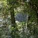 dichter Regenwald