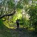 Prächtige Birken und Farnwälder. Fliegenpilze gehen mit Birken eine Symbiose ein, wir haben einige angetroffen und begrüsst.