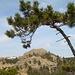 Un pino piegato dal vento incornicia il Bric Resunnou