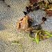 Froschleich-Orgie bei der Tössscheidi I