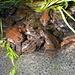 Froschleich-Orgie bei der Tössscheidi II