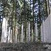 """die Skulptur """"Hinter der Zeit"""" fügt sich harmonisch in den Wald ein"""
