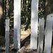 die Stehlen aus Jurakalk sind genauso standhaft wie die Bäume