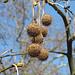Hier hängen wohl immer noch die Weihnachtskugeln am Baum ;-)