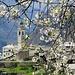 Das malerische Bergdorf Soglio taucht auf. Die Obstbäume blühen auch auf knapp 1100 m. ü. M. bereits.