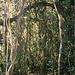 Wieder über den Grat durch die Hochlandvegetation.