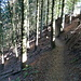 Nach dem Parkplatz gehts durch Fichtenwald am Talhang entlang. Hier ein Blick zurück.