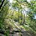 Recht steil geht es durch stimmungsvollen Wald hinunter zur Brücke im Talgrund.