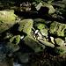 Flussbett der Warche. In diesem trockenen und warmen Herbst führt es nur wenig Wasser.