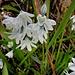 eine mir unbekannte (Garten)-Blume