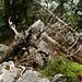 Ralligstöck: rochers et troncs d'arbre morts