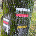 Indianerzeichen im Wald