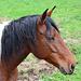Pferd bei der Auberge des Seguins.