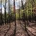 Lichter Wald  bei Fontanedo.