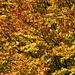 Herbst ist eben auch schön