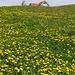 Appenzellerland im Frühling. Kurz vor Steinegg.